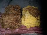 liścvie tytoniu 1 klasa