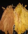 Sprzedam liście tytoniu I klasa  tel. 782-831-083
