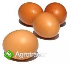 Sprzedam jajka tanio ! - zdjęcie 1