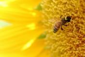 Sprzedam miód pszczeli z 2012 roku
