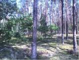 Bezpośrednio sprzedam atrakcyjną działkę leśną 3300-7800 m2