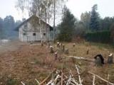 Wycinka Ścinka drzew platforma podnośnik  Łódzkie
