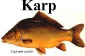 KARP HANDLOWY
