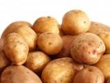 ziemniaki żółte sprzedam podlaskie