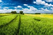Wydzierżąwię 1400 hektarów gospodarstwo rolne