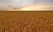 Sprzedam Gospodarstwo Rolne , ziemia rolna - 480 h