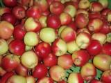 Sprzedam jabłko odmiany Gala Must(60-65mm)