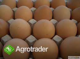 Jajka Wiejskie - zdjęcie 1