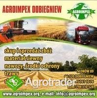 Firma AGROIMPEX kupi każdą ilość ŻYTA