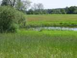 Ziemia rolna Marianowo 15,74ha i Wiechowo 7,22ha