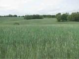 gospodarstwo rolne 60 h , zabudowania, ziemia roln