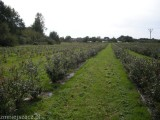Plantacja Borówki Amerykańskiej 5 ha - sprzedam