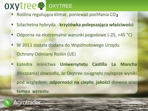 Oxytree - drzewo rosnących korzyści ( gleba: IV-VI klasa) - zdjęcie 4