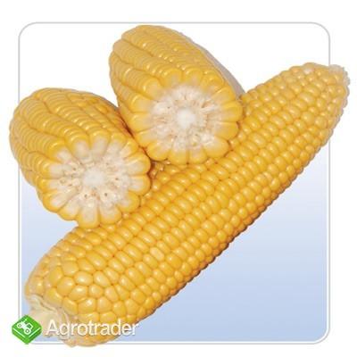 Otrebie kukurydziane