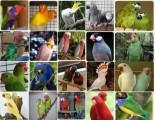 papugi i urodzajne jaj na sprzedaż