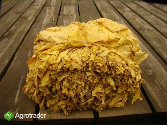 Liście tytoniu Virginia Gold,Burley TEGOROCZNE