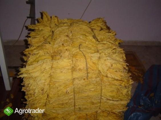 liście tytoniu do palenia VIRGINIA GOLD BURLEY - zdjęcie 1