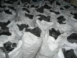 Węgiel drzewny liściastych na sprzedaż