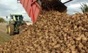 Ukraina. Wyslodki buraczane 18 zl/tona. Melasa cukrowa, pasza. Tanio