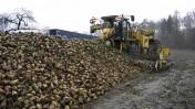 Świeże Wysłodki buraczane mokre, cukrownia Krasnystaw  2020
