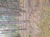 Pilnie sprzedam dwie działki leśne  las