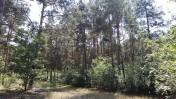 Sprzedam działki leśne 1,79ha, 1,72ha, 1,69ha
