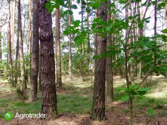 Sprzedam las blisko S17 - zdjęcie 4