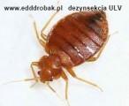 Dezynsekcja dezynfekcja zwalczanie much