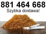 Tani tyton - GRATISY! - tyton Korsarz, tytoń Marlboro, tytoń Camel