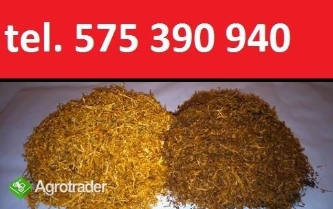 Sprzedam tytoń papierosowy - tytoń od firmy + prezenty!
