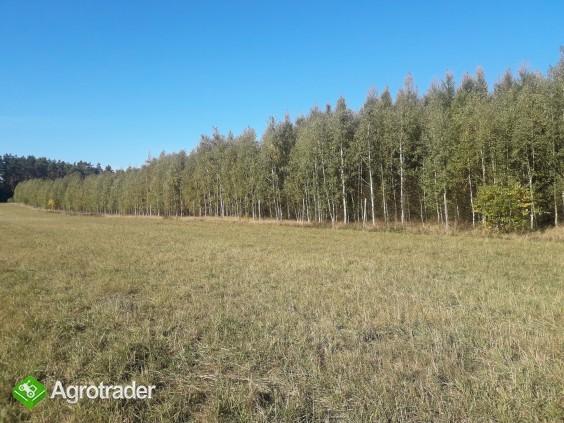 Sprzedam zadbany las z gruntem- 5 ha z dofinansowaniem z Unii do 2027r - zdjęcie 2