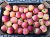Sprzedam jabłka: idared, szampion, gala schniga