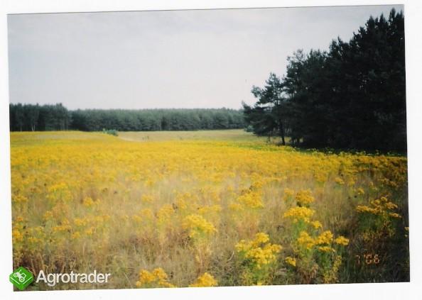 ziemia rolna na Kaszubach-działki po 3000m2 - zdjęcie 2