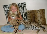 Savannah and Serval kiitens for sale