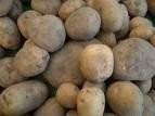 Sprzedam sadzeniaki oraz ziemniaki jadalne!