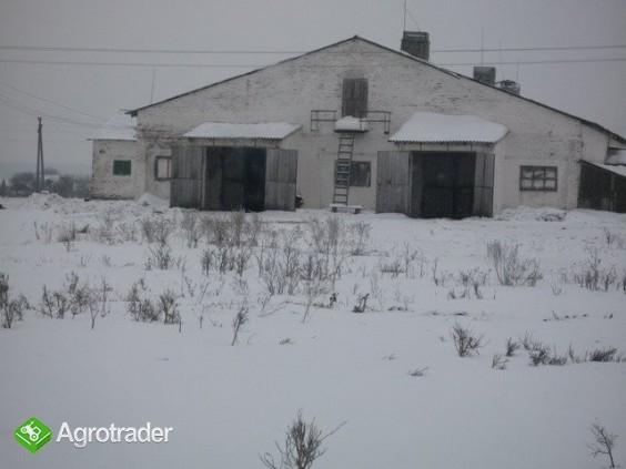 Ukraina.Gospodarstwo rolne,ferma trzody chlewnej - zdjęcie 3