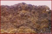Nawóz organiczny, obornik koński sezonowany
